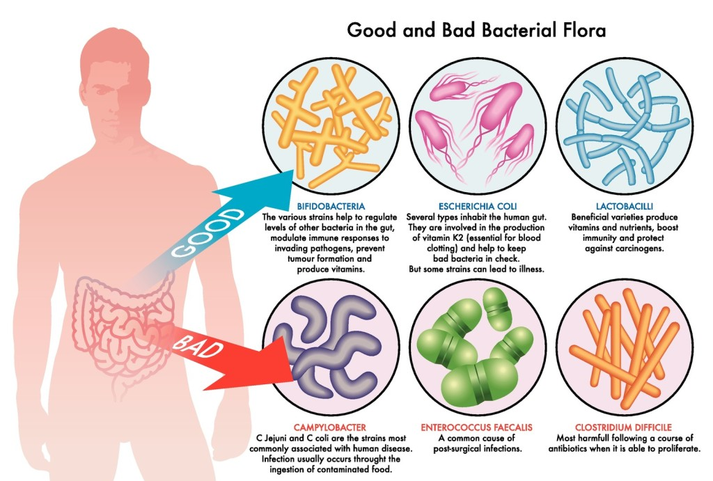 good bacteria, bad bacteria and probiotics