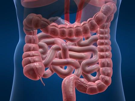 how to heal your gut, heal the migrating motor complex or MMC